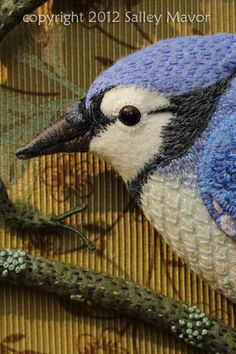bluejay detail Salley Mavor