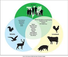 Summer Means an Elevated Risk of Zoonotic Diseases