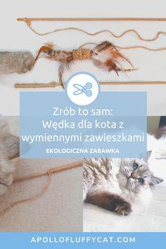 Wystarczy kawałek sznurka i patyk, abyś mógł własnoręcznie zrobić fantastyczną wędkę dla swojego kociaka, a do tego przysłużyć się środowisku! Przygotowałam dla Ciebie szczegółową instrukcję jak zrobić tą super łatwą i ekologiczną wędkę dla kota z wymiennymi zawieszkami. Diy, Lifestyle, Blog, Bricolage, Do It Yourself, Blogging, Homemade, Diys, Crafting