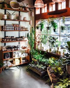 Nothing beats a bright sunny morning in the front of this little shop. The tropicals are literally glowing.