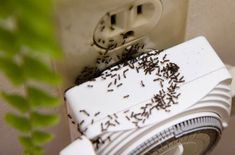 Home Remedy: The Natural Way to Kill Ants Vegetable Garden Design, Gifts For Photographers, Life Savers, Home Hacks, Pest Control, Taking Pictures, Clean House, Good To Know, Home Remedies