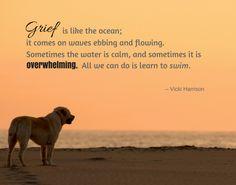 186 Beste Afbeeldingen Van Dog Loss Quotes Thoughts Sad En