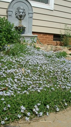 flowers near our fountain / dry river rock bed.
