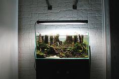 Reborn by GauthierRC Planted Aquarium, Glass Aquarium, Aquarium Ideas, Aquascaping, Vivarium, Terrariums, Aquariums, Horticulture, Fresh Water
