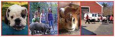 Grand Opening Celebration - Dedham Animal Care & Adoption Center