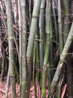 What a wonderful, versatile building product bamboo has turned out to be ...