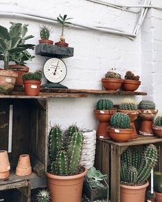 """Urban Jungle Bloggers on Instagram: """"Advice from a cactus: ✔ Get plenty of sunshine ✔ Accentuate your strong points ✔ Be patient through the dry spells ✔ Conserve your resources ✔ Wait for your time to bloom ✔ Stay sharp! 🌵🌵🌵 📷:@erikarax #urbanjunglebloggers"""""""