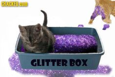 If cat litter was like this.we would clean the cat box more. Crazy Cat Lady, Crazy Cats, Munchkin Cat, Things To Come, Good Things, Hilarious, Funny, Cute Puppies, I Laughed