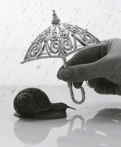 Snail. S)