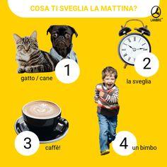 Cosa ti sveglia la mattina? Ambre, Movies, Movie Posters, Italia, Film Poster, Films, Popcorn Posters, Film Posters, Movie Quotes