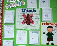 Insect unit