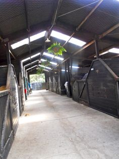 """such a light and airy barn! Love that these are all wood stalls- so many on the """"fancy"""" stalls are metal combos- but these feel much more natural Barn Stalls, Horse Stalls, Horse Barns, Dream Stables, Dream Barn, Hanging Baskets, Hanging Plants, Horse Show Mom, Horse Barn Plans"""