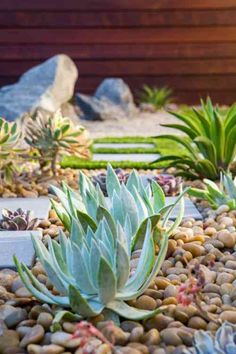 jardin rocaille et déco d'extérieur avec plantes succulentes