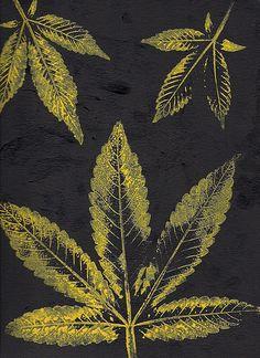 Cannabis Nitrogen Deficiency - 2013