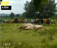 Seoni News- छिंदवाड़ा के चौरई अनुविभाग के चांद पुलिस थाने में पदस्थ कार्यवाहक प्रधान आरक्षक विजय बघेल (46) की हत्या कर शव को सिवनी के Live