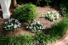 Brinker Garden - white flowers by Pandorea..., via Flickr