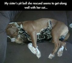 10 pictures of situations that show the true nature of pit bulls - Tiere - Hunde Animals And Pets, Baby Animals, Funny Animals, Cute Animals, Animal Funnies, Animal Memes, Pit Bulls, I Love Dogs, Cute Dogs