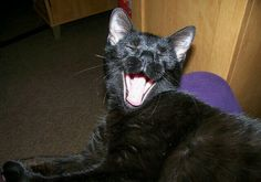 Pretty black cat