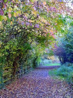 Woodland Path, Watermead, England =estive em Londres e no interior mas neste lugar magnifico , nao passei...