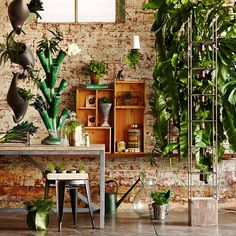 I love the idea of having green vines and plants all along an old brick wall - inside.