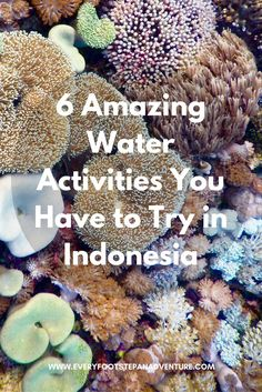 The glorious, clear warm waters of Indonesia are a perfect way to spend some time. Here are 6 AMAZING water activities you have to try in Indonesia! Asia Travel, Solo Travel, Travel With Kids, Family Travel, Water Activities, Adventure Travel, Adventure Awaits, Southeast Asia, Travel Photos