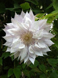 This beautiful flower caught my eye! Happy summer!