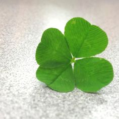 Four leaf clover! For my lucky girl, 7-11 is her number.