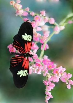 Butterfly In The Pink Photograph  - Butterfly In The Pink Fine Art Print