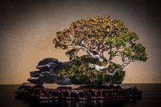 Omiya-bonsai-art-museum. Bonsai-art, bonsai-tree, bonsai-Japan, bonsai.