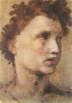 Testa di Giovane,Domenico Beccafumi, Borghese Gallery, Rome