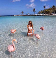 This beach let's you swim with flamingos!