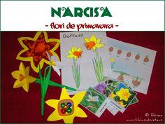 Flori de primavara: NARCISA! / Spring flowers - Daffodil!