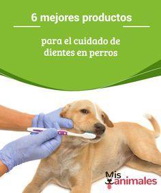 6 mejores productos para el cuidado de dientes en perros. La salud bucal de nuestra mascota es un aspecto primordial en la manutención de nuestro perro. En este artículo, os recomendamos los mejores productos del mercado para mantener su boca y sus dientes a tope.