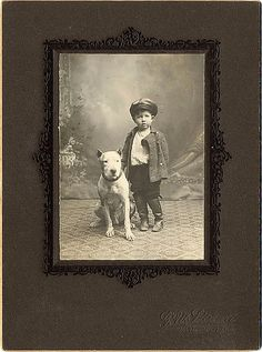 "Pit Bull and his human friend posing for a studio portrait   ""studio boys""
