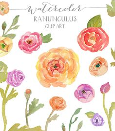 Ranunculus Watercolor Flowers - Clip Art