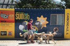 Jim Blair walks Saluki dogs past a solar eclipse exhibit on the campus of Southern Illinois University on Saturday Eclipse Video, Eclipse Festival, Carbondale Illinois, Moon Shadow, Streaming Hd, Southern Illinois, Grand Teton National Park, Once In A Lifetime, Solar Eclipse