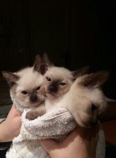My Kitten Bouquet . Kitten, Bouquet, Cats, Animals, Cute Kittens, Kitty, Gatos, Animales, Animaux
