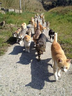 cat parade starts at 11