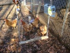 10 Toys for Your Backyard Chickens – The Owner-Builder Network Best Egg Laying Chickens, Raising Backyard Chickens, Backyard Chicken Coops, Keeping Chickens, Chicken Coop Plans, Building A Chicken Coop, Chicken Coup, Chicken Garden, Farm Chicken