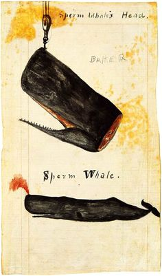 cocoroachchanel:  Drawing of a whale's head being hoisted upward, from the journal of Rodolphus W. Dexter, kept aboard the bark Chili in the early 1860s. Courtesy the New Bedford Whaling Museum.