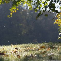 Early morning dew .... Lumley Castle