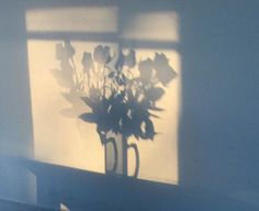 Shadow of flowers.