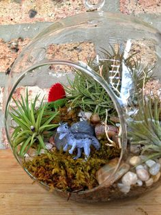 Jumbo Multi-Level Dinosaur and Air Plant Moss Terrarium great cute idea for boys room that can also add some good plant smell to counteract boy smell :)