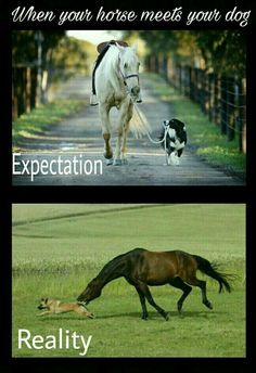 Horse Memes When your horse meets your dog - Horses Funny - Funny Horse Meme - - Horse Memes When your horse meets your dog The post Horse Memes When your horse meets your dog appeared first on Gag Dad. Funny Horse Memes, Funny Horse Pictures, Funny Horses, Funny Animal Quotes, Cute Horses, Animal Jokes, Dog Memes, Cute Funny Animals, Cute Baby Animals