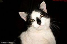 29 foto di gatti che sorridono