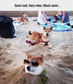 Doge On Beach Day