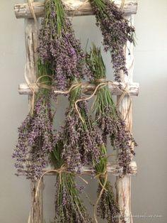 Dry lavender on an old ladder.