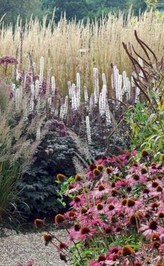 My Favorite Plant Combinations 30