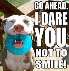 I doggy dare ya! :)