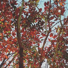#Gabrielaarroiophotos #nature #trees #photo